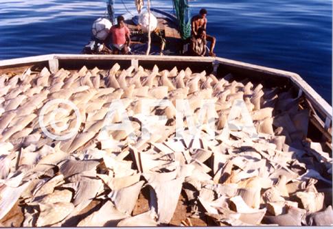 sharkfinning.jpg